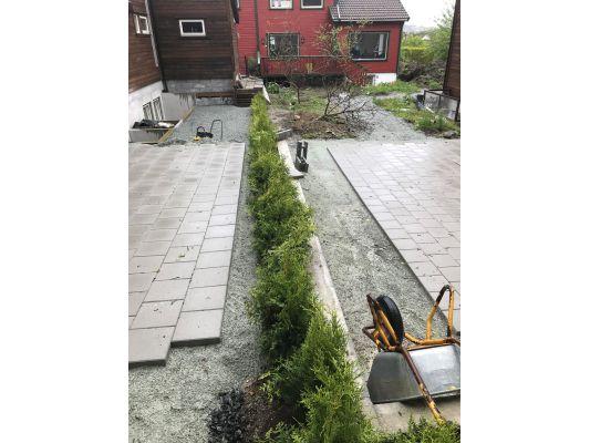Thuja Brabant Stavanger